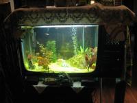 ТВ акваријум